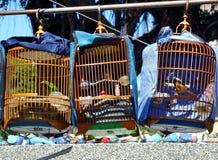 Venditore ambulante Selling Songbirds fotografie stock libere da diritti