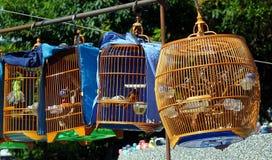 Venditore ambulante Selling Songbirds fotografia stock libera da diritti