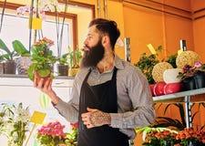 Venditore barbuto brutale del fiore con i tatuaggi sulle sue armi in un flowe Fotografia Stock Libera da Diritti