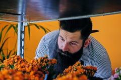 Venditore barbuto brutale del fiore con i tatuaggi sulle sue armi in un flowe Immagini Stock