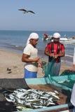 Venditore del pesce in Barka, Oman immagine stock libera da diritti