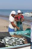 Venditore del pesce in Barka, Oman fotografia stock