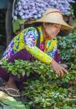 Venditore delle verdure nel Myanmar Fotografia Stock Libera da Diritti
