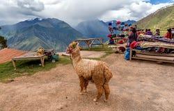 Venditori ambulanti in Cusco, Perù Fotografia Stock Libera da Diritti