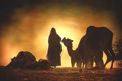 Venditori del cammello dalla città di Pushkar, Pushkar Mela Immagine Stock Libera da Diritti