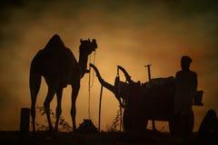 Venditori del cammello dalla città di Pushkar, Pushkar Mela Immagini Stock