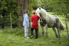 Vendo o cavalo Imagens de Stock