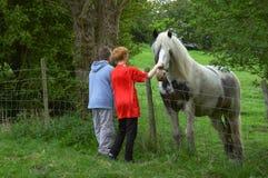 Vendo o cavalo Fotos de Stock Royalty Free