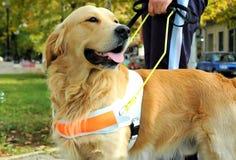 Vendo o cão do olho Foto de Stock Royalty Free