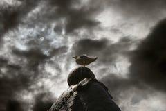 Vendo o mundo de acima Imagens de Stock Royalty Free
