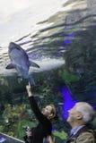 Vendo o tanque do tubarão no aquário de Toronto foto de stock