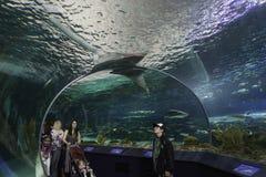 Vendo o tanque do tubarão no aquário de Toronto fotografia de stock