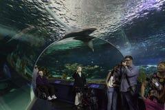 Vendo o tanque do tubarão no aquário de Toronto imagem de stock