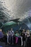 Vendo o tanque do tubarão no aquário de Toronto foto de stock royalty free