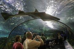 Vendo o tanque do tubarão no aquário de Toronto imagem de stock royalty free