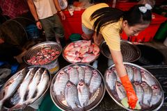 Vendor Thai woman with latex gloves cleaning freshwater fish at stock photography