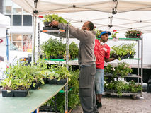 Vendors arrange plants at outdoor market in Lower Manhattan Stock Image