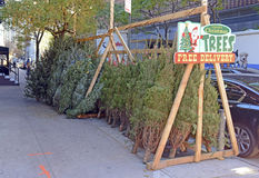 Vendors selling Christmas Trees on the streets of Manhattan. Stock Photography