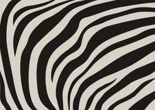 Vene della zebra Immagine Stock