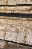 Vene di carbone Immagini Stock