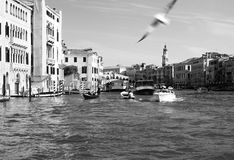 Venedig 2010 Royaltyfri Bild
