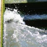 Venedig färgstänk av vatten och alger på kusten arkivfoto