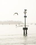 Venedig-Lagune und -vögel auf Beitrag im Wasser Stockfoto