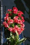 Venedig röda blommor på kanalen royaltyfri fotografi