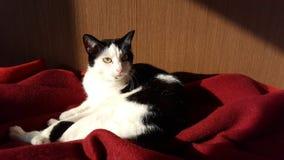 Venere del gatto immagine stock libera da diritti