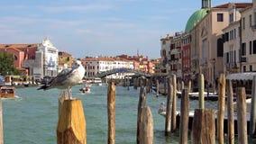 VENETIË, ITALIË - OKTOBER, 2017: Majestueus groot kanaal in Venetië, en waterverkeer, Venetië, Italië Vaporetto in Venetië - stock videobeelden