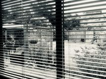 Looking through Venetian Blinds into the Garden. Venetian blinds provide shade and privacy in a suburban home. They are a popular window treatment stock images