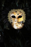 Venetian carnival mask with feather Royalty Free Stock Image