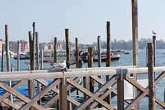 Free Venetian Jetty Stock Images - 13975164