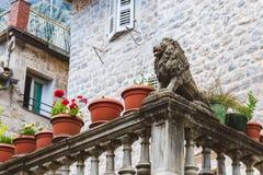 Venetian Lion Statue at Kotor Stock Photos