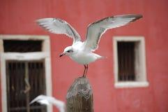 Veneza, gaivota no fundo vermelho Imagens de Stock