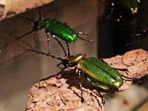 Veneza - insetos de vidro Foto de Stock Royalty Free