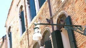 Veneza, Itália - 7 de julho de 2018: arquitetura antiga bonita de Veneza duas pombas, pombos estão sentando-se em uma lâmpada de  filme