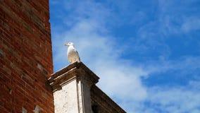 Veneza, Itália - 7 de julho de 2018: a opinião do close-up a gaivota só senta-se sobre uma construção contra um céu azul na praça filme