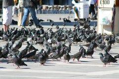Veneza, praça San Marco com pombos foto de stock
