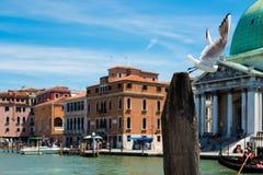 Venezia Fotografia Stock