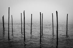 Venezia bollards. Bollards in Venezia with a single seagull sitting on it royalty free stock photography