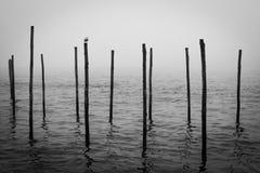 Veneziameerpalen royalty-vrije stock fotografie