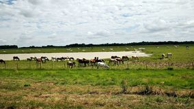 Venezolaanse vlaktes Stock Afbeelding
