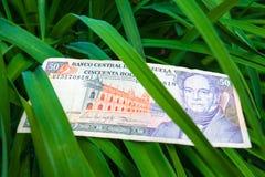 50 venezolanische bolivares Banknote auf den Blättern Stockfotografie