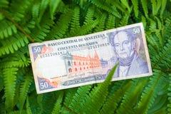 50 venezolanische bolivares Banknote auf den Blättern Stockbilder