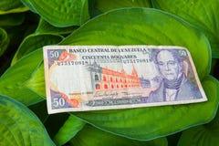 50 venezolanische bolivares Banknote auf den Blättern Lizenzfreie Stockbilder