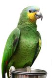 Venezuela Amazon parrot on white Stock Photo