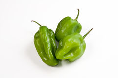 Venezuelan Aji dulce pepper Stock Photography