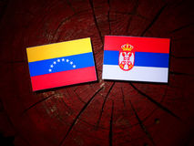 Venezuelan flag with Serbian flag on a tree stump isolated. Venezuelan flag with Serbian flag on a tree stump royalty free stock photos