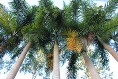 Venezuelan Tropical Green Palm Trees stock images